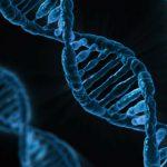 Gentherapie gegen Krebs - Kymriah - CAR-T - Krebs-Info - DNA